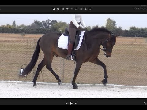 miriam frenk andalusian horses for sale from spain