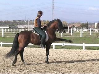 beda_stallion_18
